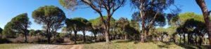 Park Narodowy Strofilias